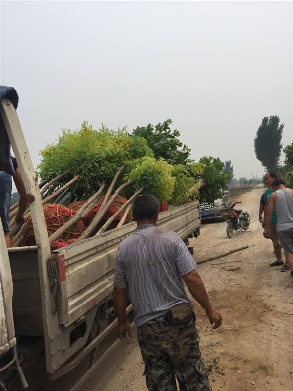 基地起树装车