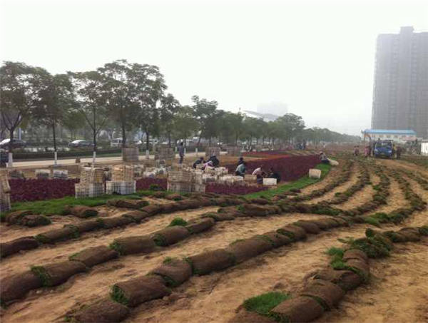 绿化施工现场4